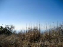 Grasses at Topanga Royalty Free Stock Photography