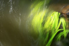 Grasses in water. Some grasses flowing in water Stock Photo