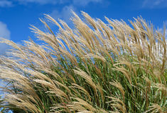Grasses In Wind Stock Photos