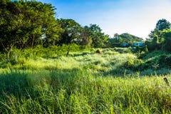 Grassfield在美好的阳光下 免版税库存图片