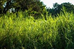 Grassfield在美好的阳光下 图库摄影