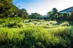 Grassfield在美好的阳光下 免版税库存照片