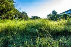 Grassfield在美好的阳光下 免版税图库摄影