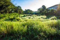 Grassfield在美好的阳光下 库存图片