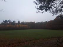 Grassfield au milieu de la forêt images stock