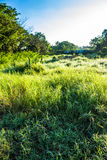 Grassfield in beautiful sunshine. ChiangMai, Thailand. January, 15-2017: Grassfield in some place growing up rapidly in natural background Royalty Free Stock Images