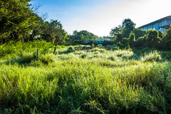 Grassfield in beautiful sunshine. ChiangMai, Thailand. January, 15-2017: Grassfield in some place growing up rapidly in natural background Royalty Free Stock Photos