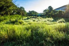 Grassfield in beautiful sunshine. ChiangMai, Thailand. January, 15-2017: Grassfield in some place growing up rapidly in natural background Stock Image