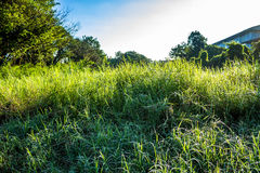 Grassfield in beautiful sunshine Stock Images