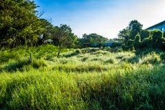 Grassfield in beautiful sunshine Stock Image
