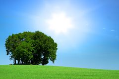 Grassfield with a bunch of trees Royalty Free Stock Photo