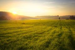 Grassfield e montanhas no por do sol Imagem de Stock