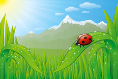 Grassfield landscape with ladybug. Vector grassfield landscape with ladybug, dew drops and sunny mountains Stock Photos