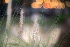 grassfield mit bokeh Licht Stockfotografie