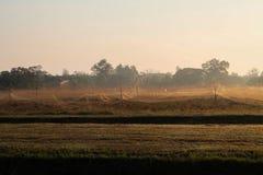 Grassfield n a manhã Foto de Stock Royalty Free