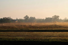 Grassfield n the morning. White net covering the grass field prevventing the bird and pest perpared to do agriculture in the morning royalty free stock photo