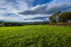Grassfield. In Ogndal not far from Steinkjer, Norway Stock Photography