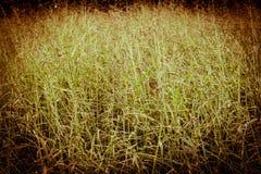 Grassfield in vintage Stock Photos