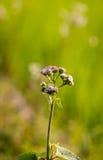 Grassflower Obrazy Stock