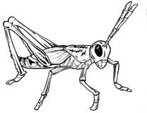 Grasshopeer Drawing. Line art of grasshopper drawing Stock Images