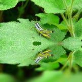 Grasshoper Stock Images