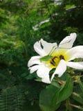 Grasshoper verde foto de archivo