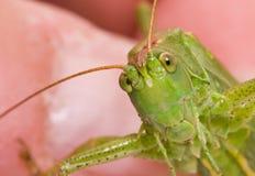 grasshopper ενέργειας Στοκ εικόνα με δικαίωμα ελεύθερης χρήσης