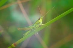 grasshopper κινηματογραφήσεων σε & στοκ φωτογραφίες με δικαίωμα ελεύθερης χρήσης