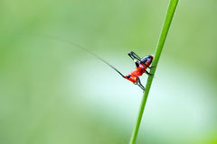 grasshopper λίγα Στοκ φωτογραφία με δικαίωμα ελεύθερης χρήσης