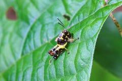 Grasshopper που σκαρφαλώνει σε ένα φύλλο Στοκ φωτογραφίες με δικαίωμα ελεύθερης χρήσης