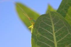 grasshopper ρολόι Στοκ φωτογραφίες με δικαίωμα ελεύθερης χρήσης