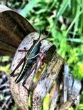 grasshopper σε έναν φοίνικα στοκ φωτογραφία με δικαίωμα ελεύθερης χρήσης
