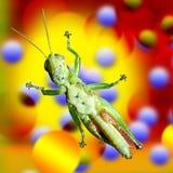 Grasshopper σε ένα παράθυρο γυαλιού με ζωηρόχρωμο του γραφικού σχεδίου ο Στοκ εικόνες με δικαίωμα ελεύθερης χρήσης