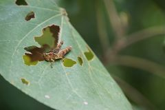 Grasshopper στις άγρια περιοχές στοκ εικόνες