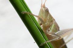 grasshopper στο χώμα Στοκ εικόνες με δικαίωμα ελεύθερης χρήσης