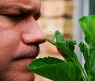 grasshopper το άτομο συναντιέται Στοκ εικόνες με δικαίωμα ελεύθερης χρήσης