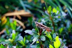 Grasshopper φαντασίας στοκ εικόνες με δικαίωμα ελεύθερης χρήσης