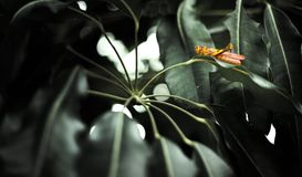 grasshopper φύλλο Στοκ Φωτογραφία