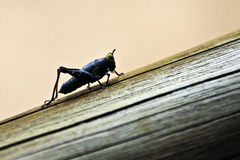 Grasshopper. A photo of a grasshopper on a log Stock Photo