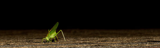 A grasshopper. On a roof Stock Photos