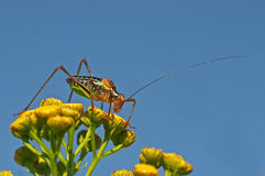 Grasshopper. Sitting on a plant stock photography