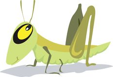 A grasshopper Stock Image