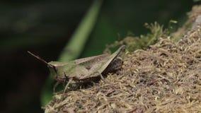 Grasshopper φιλμ μικρού μήκους