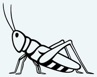 Free Grasshopper Royalty Free Stock Image - 42465756