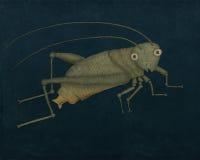 Grasshopper Στοκ φωτογραφίες με δικαίωμα ελεύθερης χρήσης