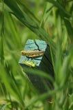 Grasshopper. S shot in a marsh in Illinois Stock Photo