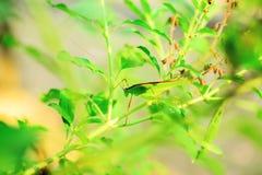 Grasshopper στοκ φωτογραφία με δικαίωμα ελεύθερης χρήσης