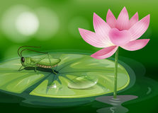 A grasshopper above a waterlily beside a pink flower Stock Photos