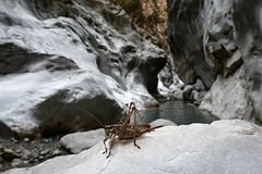 Grasshopper in the canyon Royalty Free Stock Photography