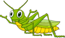 Grasshopper cartoon Stock Photos